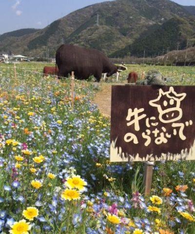 松崎町花畑イベント