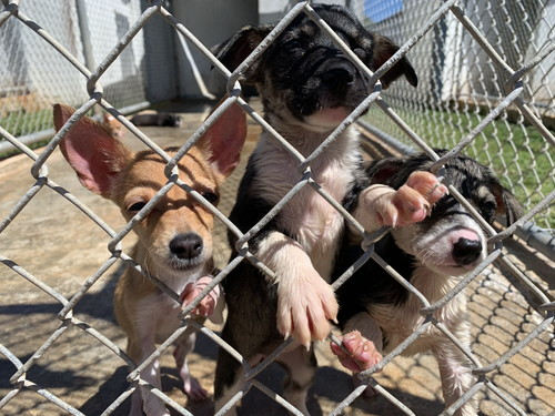 guam animals in need gain